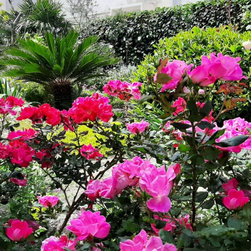 Romantični vrt ruža
