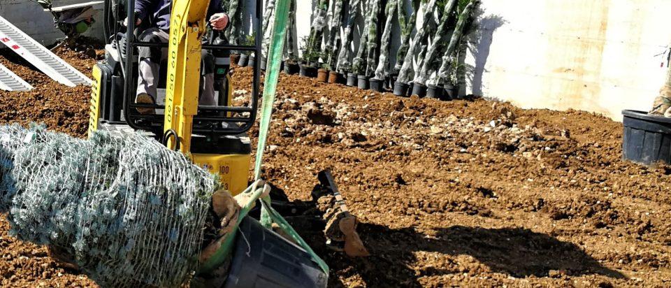 primjer kontejnirane i balirane sadnice